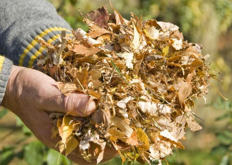 feuilles-mortes-2